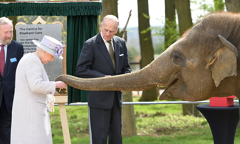 The Queen and Prince Philip fed Donna the elephant a banana at the new Centre for Elephant Care at Whipsnade Zoo.