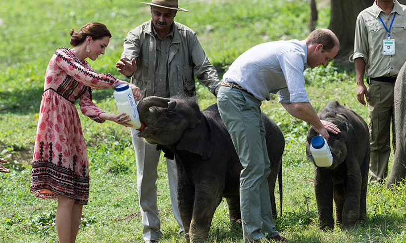 Prince William showed off his nurturing side as he fed baby elephants in India with wife Kate. 