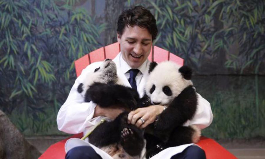 <p>Can we say panda-monium?! The Toronto zoo's Jia Panpan and Jia Yueyue showered the Canadian PM with love during his visit to the sanctuary. 