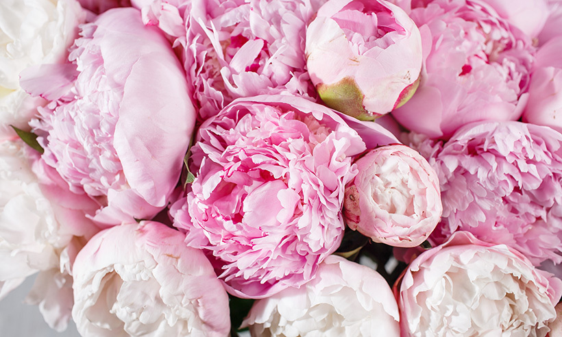<h4>P is for Peonies</h4>