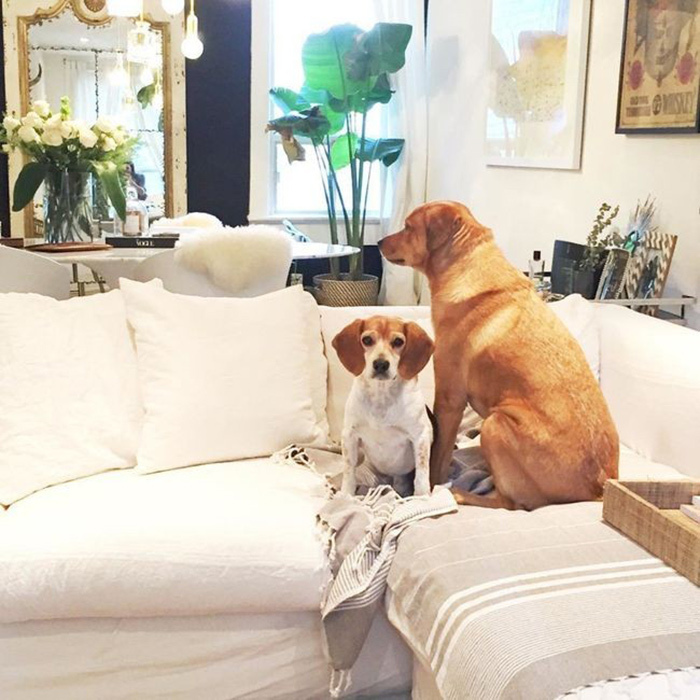 <h4>D is for Dogs</h4>