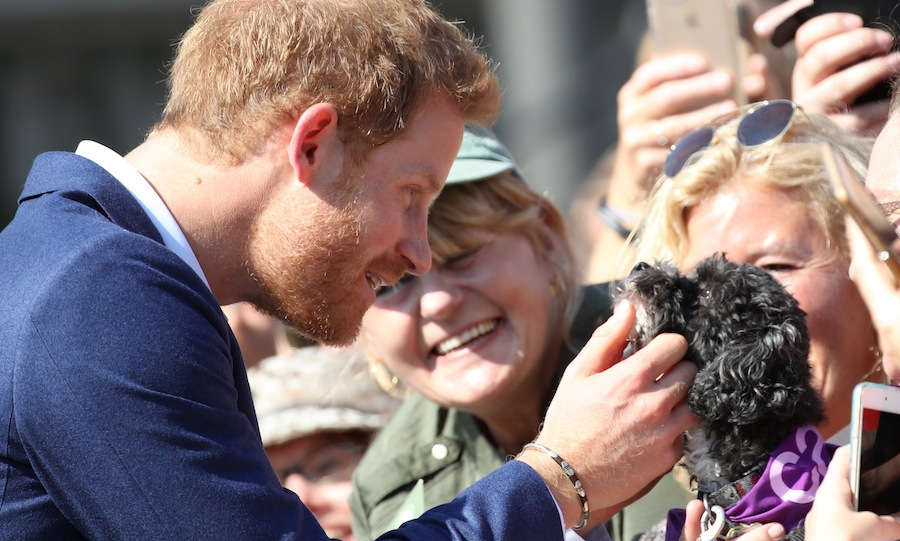 On his second day in Toronto, Prince Harry visited the Centre for Addiction and Mental Health, where he met with doctors and researchers to learn more about the centre's programs. Afterwards, the royal greeted a large crowd of fans, including this adorable little puppy! 