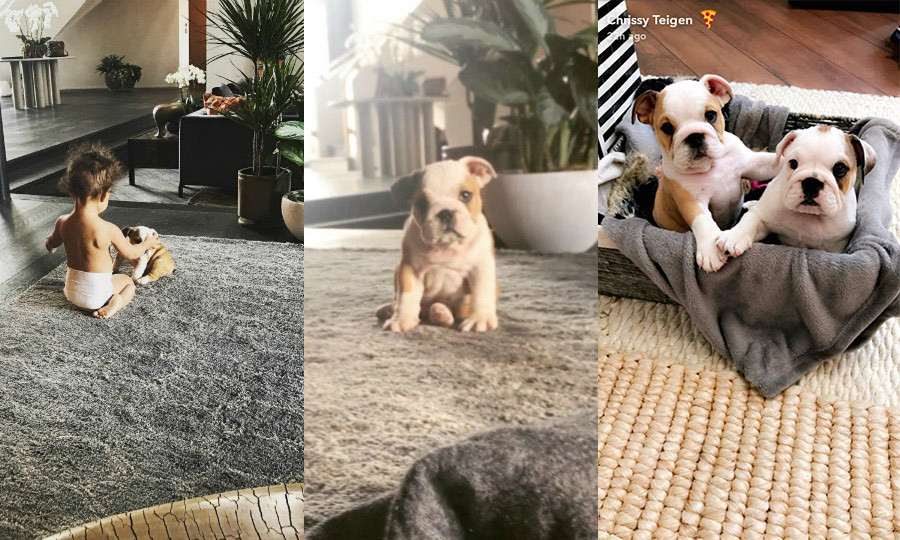 Chrissy Teigen and John Legend have added not one, but two new additions to their beautiful family. The parents of one introduced their daughter Luna to a pair of adorable bulldog puppies, one of which they called Pepper.  