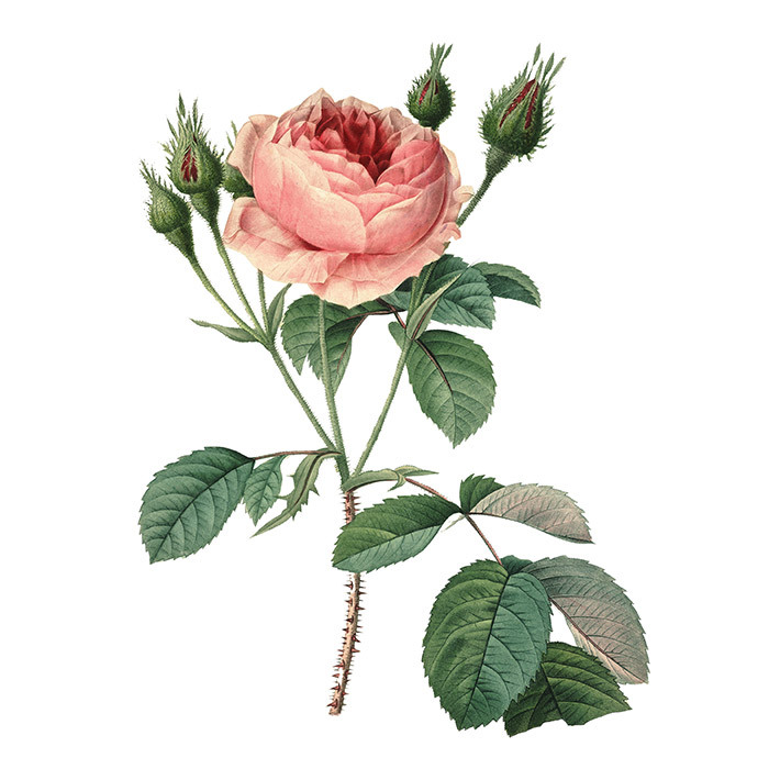 "<h4>ROSE</h4> <p>Rose fragrances have shed their reputation for being old-fashioned, and the scents making their debut this fall aren't your grandmother's fleur. They're dark, sophisticated and flirt with notes like oud, oak and patchouli.</p> <p>A rose can be as dark or warm as you want, says Victoria. ""It depends on what else is found in it."" Pink peppercorn, for example, adds brightness or fizziness, whereas oak notes imbue rose with an earthiness. The smell also depends on the type of rose that's used (there are hundreds of varieties to choose from), from rose de mai to Taif rose, which is traditionally used in Middle Eastern perfumery. ""Turkish roses, the most sensual of all, already have a very dark and earthy side to them and are the perfect choice for the fall,"" says Michael.</p>"