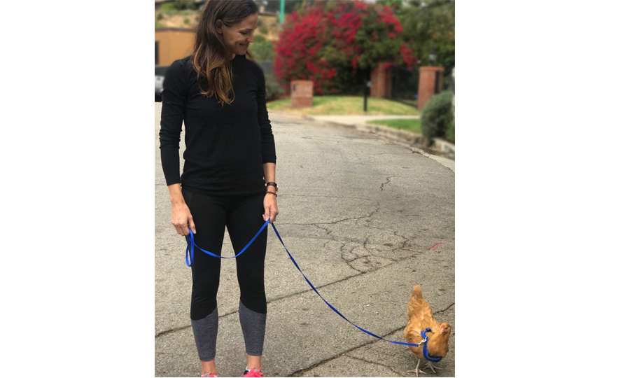 <p>Actress Jennifer Garner revealed a new addition to her family! The Hollywood star shared an adorable photo of herself taking her pet chicken for a walk. The star named her bird Regina George after Rachel McAdam's character in the cult classic <i>Mean Girls</i>.