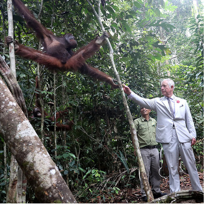 <p>Prince Charles had a chance to get up close with the animals during a visit to Semenggoh Wildlife Centre in Kuching, Malaysia. The royal fed this new furry friend at the rehabilitation center, which treats orangutans found injured in the wild or rescued from captivity.