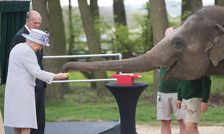 The Queen made a rather large new friend during a visit to the Whipsnade Zoo in April. The monarch officially opened the zoo's new Elephant Care Centre and carried out feeding duties for a hungry seven-year-old elephant named Donna. 