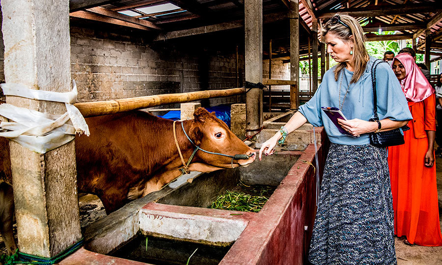 Queen Maxima stopped to have a quick chat with some cattle during her trip to Indonesia.