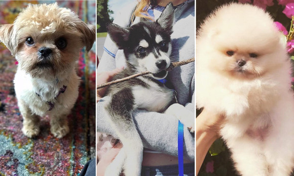 Click through to see the cutest Instagram snaps of our favourite celebrity pets!