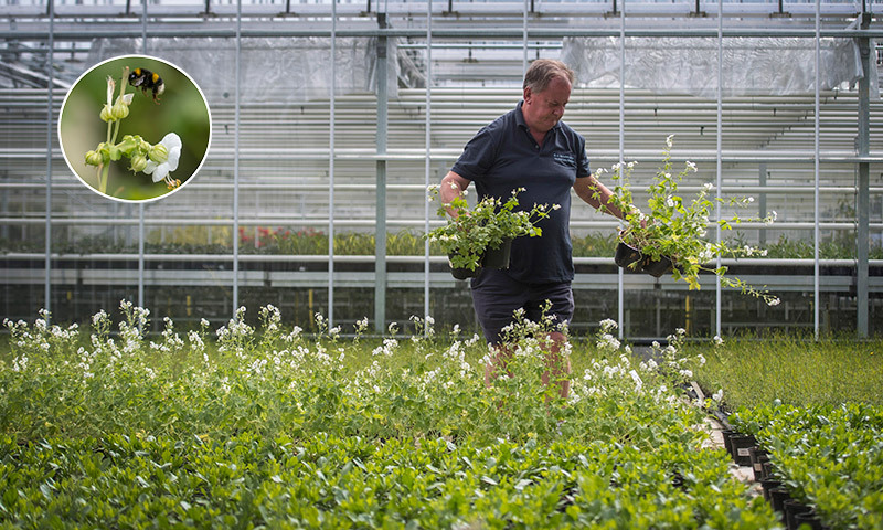 <h2>Inspecting the pollinator plants</h2>