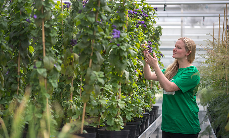 <h2>Pretty purple blooms are prepared for their moment in the spotlight</h2>