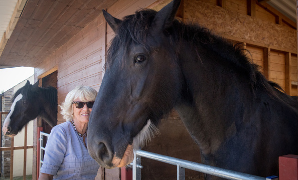 Camilla shared a sweet moment with a Shire horse during her visit to Dyfed Shire Horse Farm in West Wales on July 3.