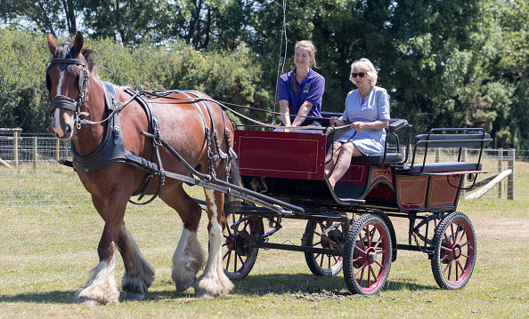 The Duchess of Cornwall went for a carriage ride at Dyfed Shire Horse Farm on July 3 during her visit to Wales with Prince Charles. The family run enterprise has been breeding the Dyfed bloodline of Shire Horses for almost 40 years, on a farm that has been in the family since 1849.