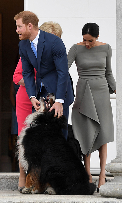 Both Harry and Meghan have a love for dogs.