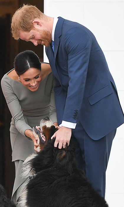And they called it puppy love... Dog lovers Prince Harry and Meghan took a moment with one of the Bernese Mountain Dogs owned by Ireland's president, Michael Higgins.