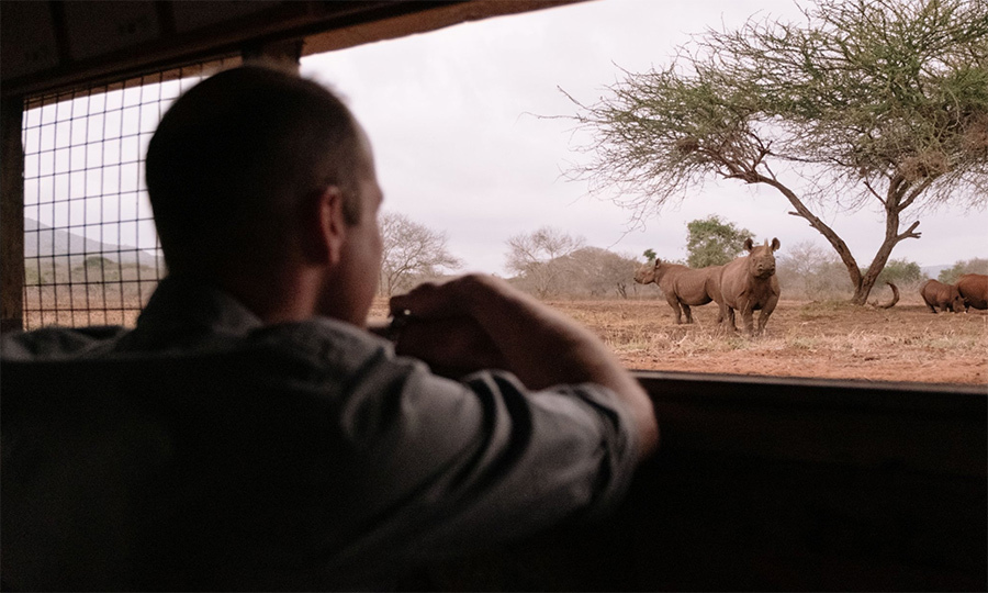 The royal watched on as the rhinos grazed.