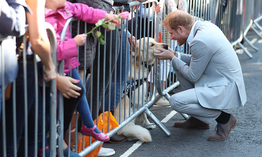 Prince Harry met an adorable pooch during his walkabout. Both animal lovers, he and Meghan are believed to have recently adopted a black lab named Oz - a companion for their rescue beagle Guy. 