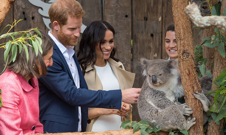 While at the Taronga Zoo, the Duke and Duchess of Sussex had a sweet meeting with a koala! Prince William and Kate also visited the same zoo back in 2014 with baby Prince George, and met some equally as adorable animals.
