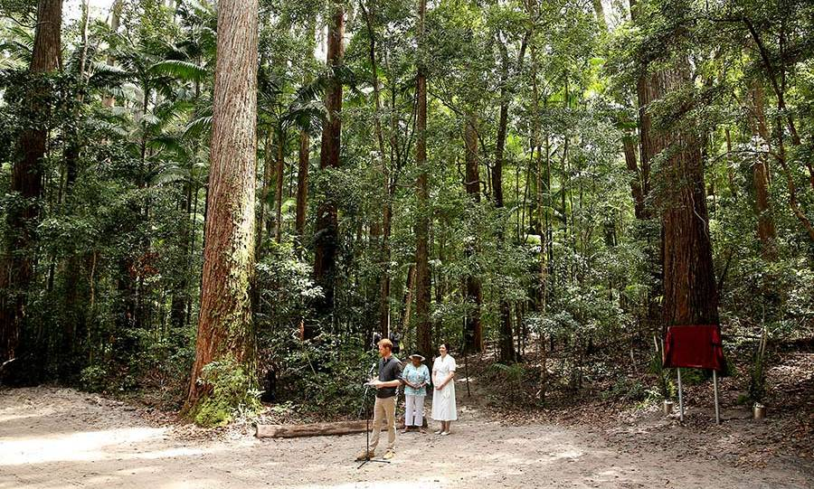 "In the stunning Pile Valley on Fraser Island, which boasts the only rainforest in the world that grows out of sand, Prince Harry made a speech as he dedicated the stunning space with it's giant Satinay trees to the Queen's Commonwealth Canopy. While there a flirty fan exclaimed, ""He's better looking in person,"" to which the prince responded, ""I'll take that as a compliment!""