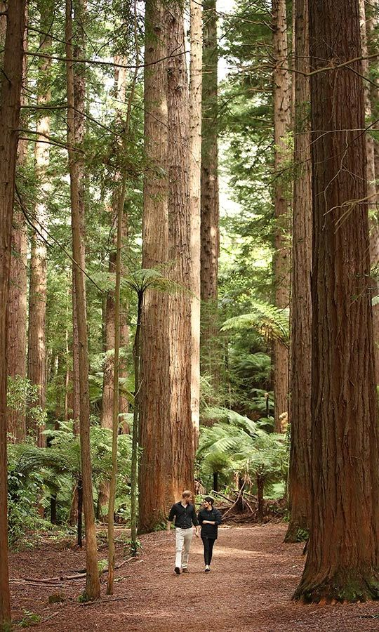On their very last engagement of the tour at the Redwoods Nature Walk in New Zealand, the couple enjoyed a romantic walk in the woods among 117-year-old trees. 