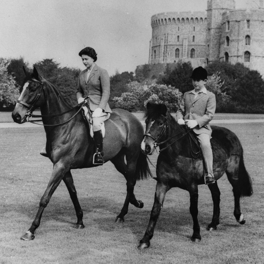 <h2>FOUR-LEGGED FRIENDS</h2>