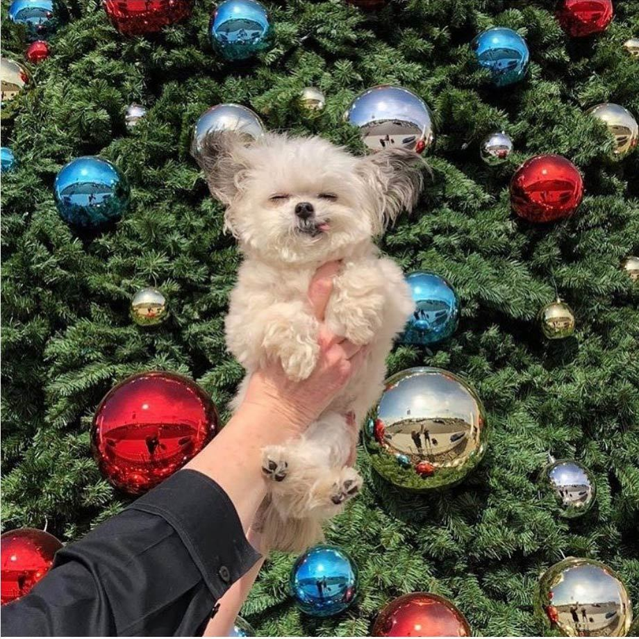 "Reese Witherspoon likes to keep it light during a particularly stressful time of year! She held up her pup, Norbert, in front of the tree and captioned it: ""After you've been decorating for hours and finally get a picture in front of the tree.""