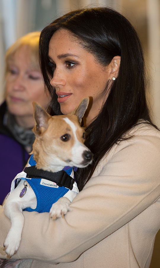 On top of her natural pregnancy glow, the mom-to-be wore her usual bronzed skin with a smoky eye and peachy lip as she greeted the organization's canine cuties. 