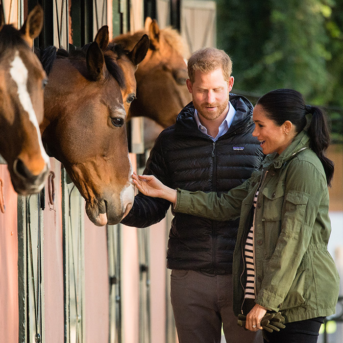 The two are both big animal lovers, with Meghan having adopted a few dogs in the past and Harry being an avid polo player.