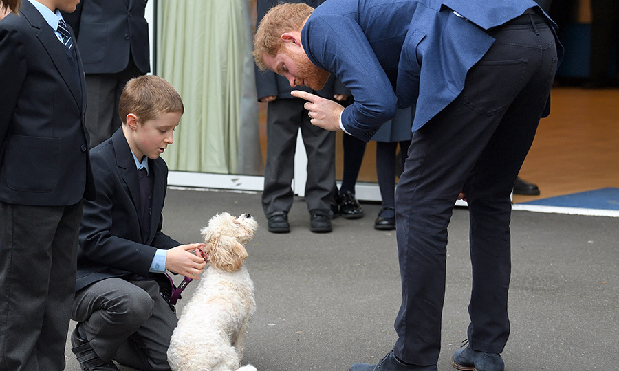 Harry also made a new furry friend at the school, too!