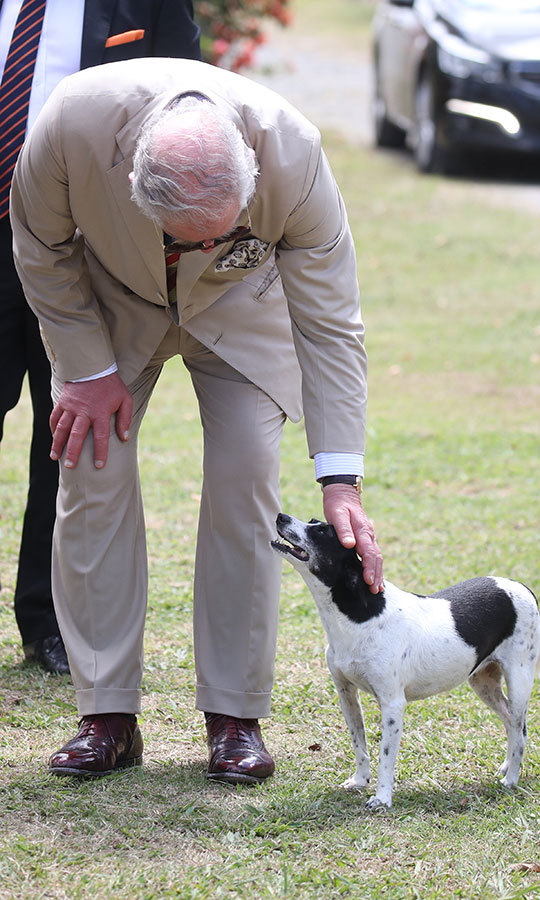 Charles also made a new canine friend, who seemed equally as pleased to meet him as he was to meet them! 