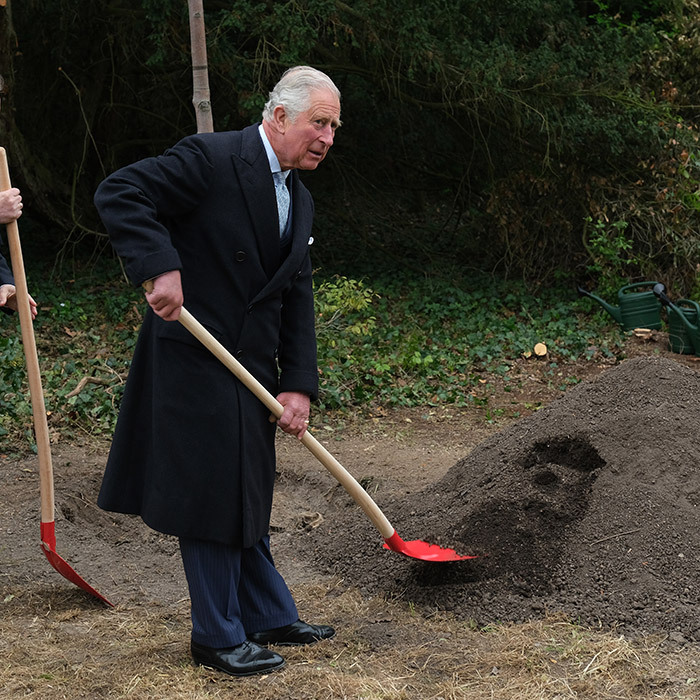 The future King shovelled dirt to help plant a tree called a whitebeam at the park gardens.