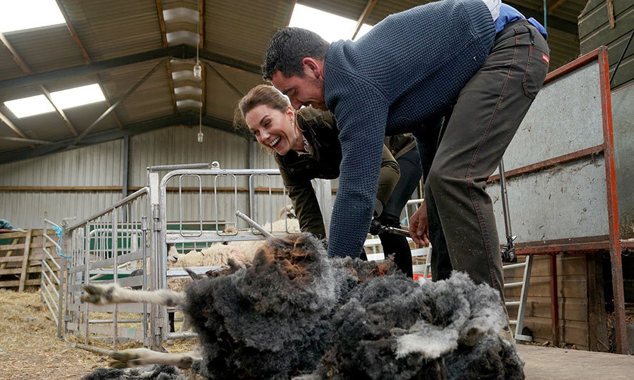 Kate even helped shear a sheep, and was really into it! 