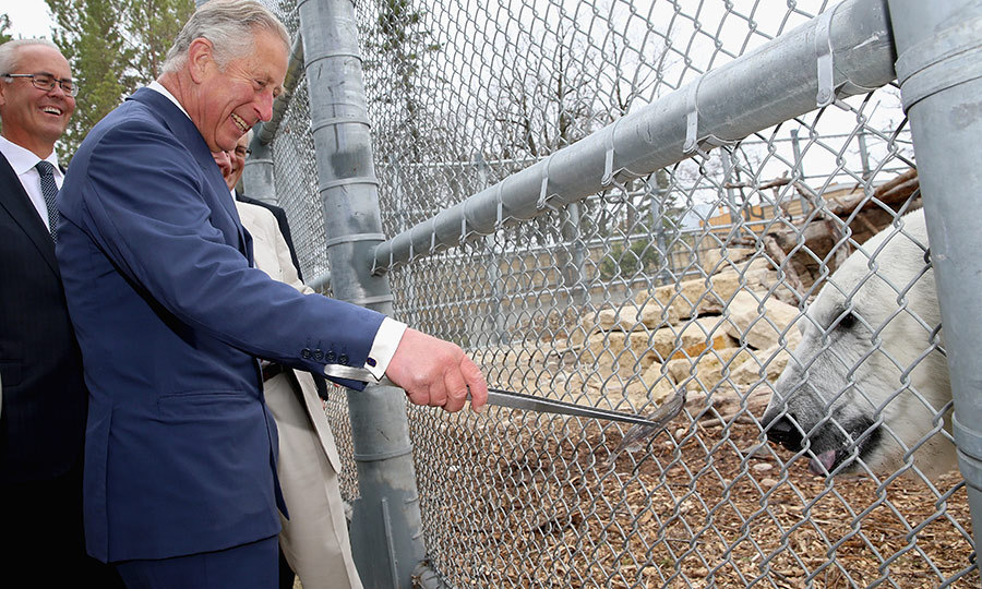 This bear isn't named Winnie, but it looks like he and Charles enjoyed each other! The Prince of Wales looked thrilled as he got the opportunity to feed a polar bear named <strong>Hudson</strong> at the Assiniboine Park Zoo in Winnipeg in 2014. 