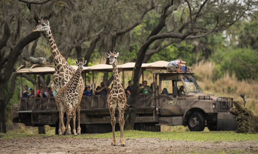 <h2>Game Plan</h2>