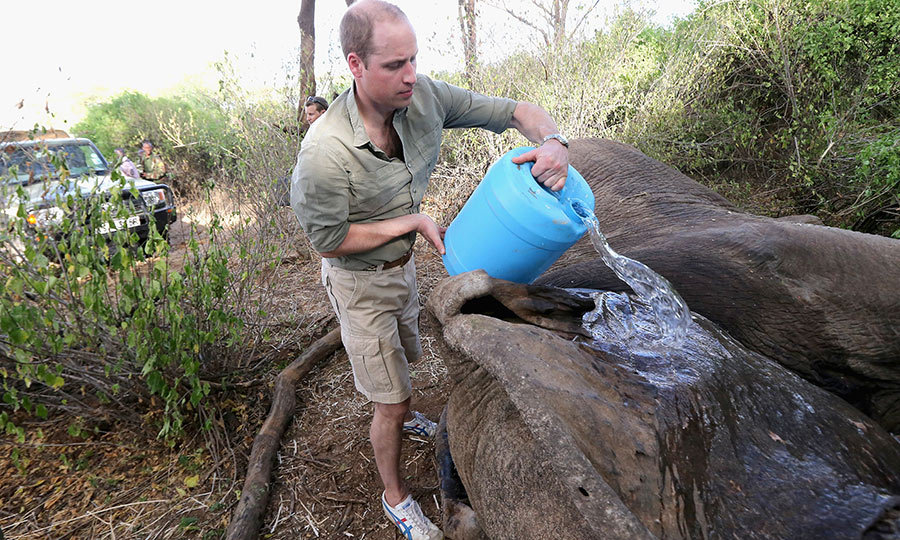 "In 2016, <strong><a href=""/tags/0/prince-william"">Prince William</a></strong>, who is Patron of the Conservation group Tusk Trust returned to the Lewa Wildlife Conservancy.