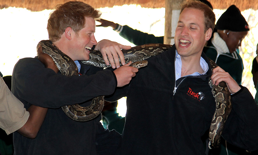 "In 2010 <strong><a href=""/tags/0/prince-harry"">Prince Harry</a></strong> and <strong><a href=""/tags/0/prince-william"">Prince William</a></strong> carried out their first overseas joint engagement when they travelled to Botswana, Lesotho and South Africa.