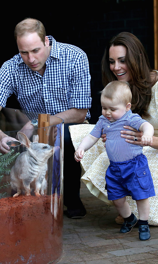 George meets George! The little prince gave the sweetest smile to this bilby, who shares his name, while visiting Sydney's Taronga Zoo on April 20, 2014. 