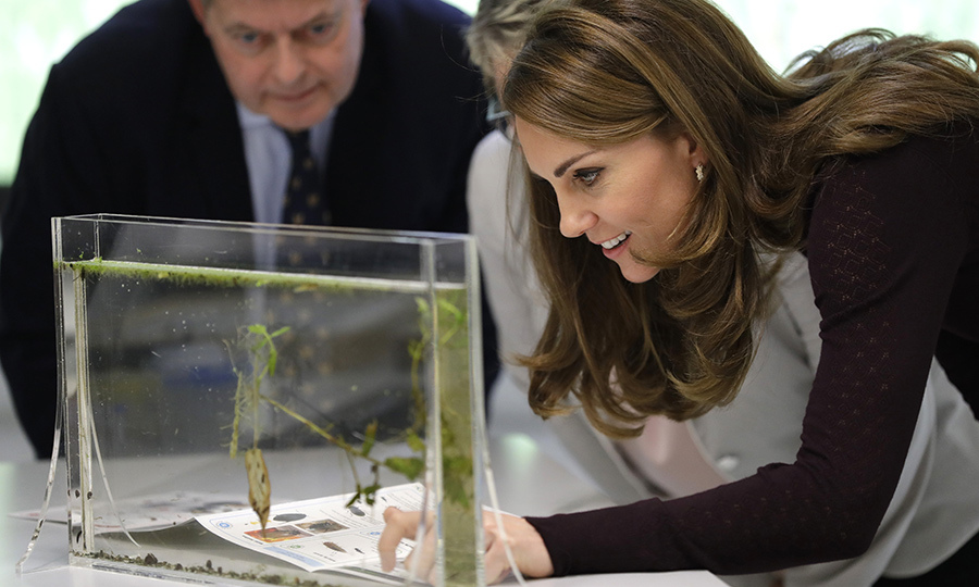 She was particularly into this model, which features plants and newts in an aquarium!