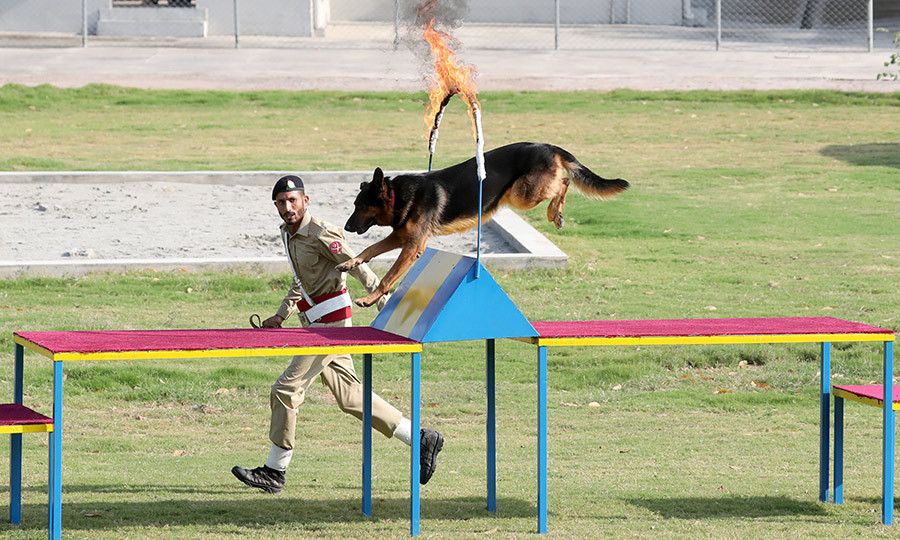 The couple also got to see an agility course the dogs are put through as part of their training.