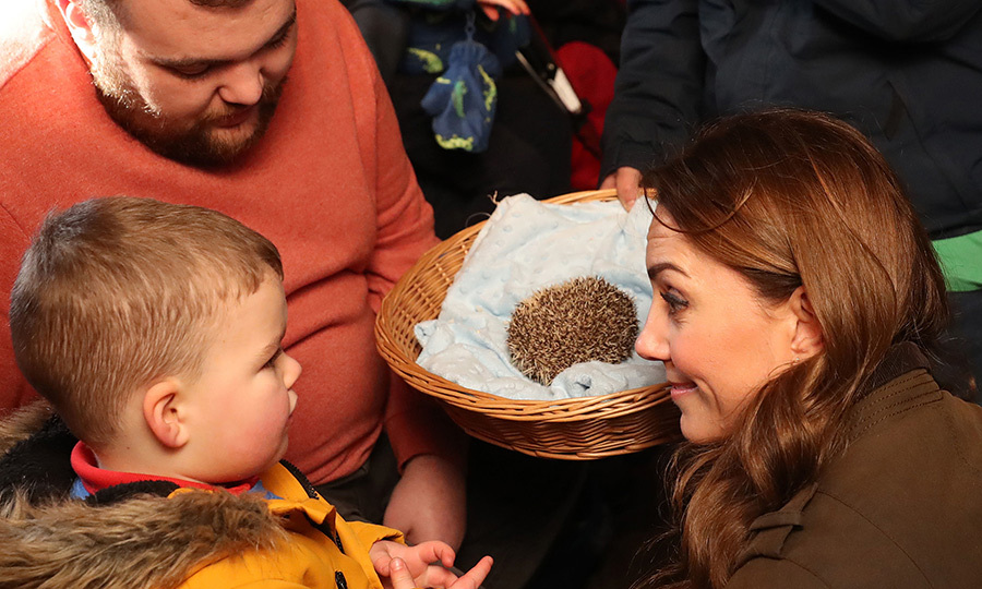 ... and also met this (very shy) hedgehog.