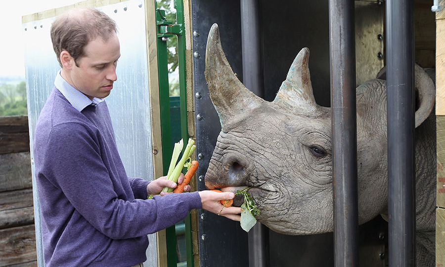<h2>Prince Wiliam</h2>