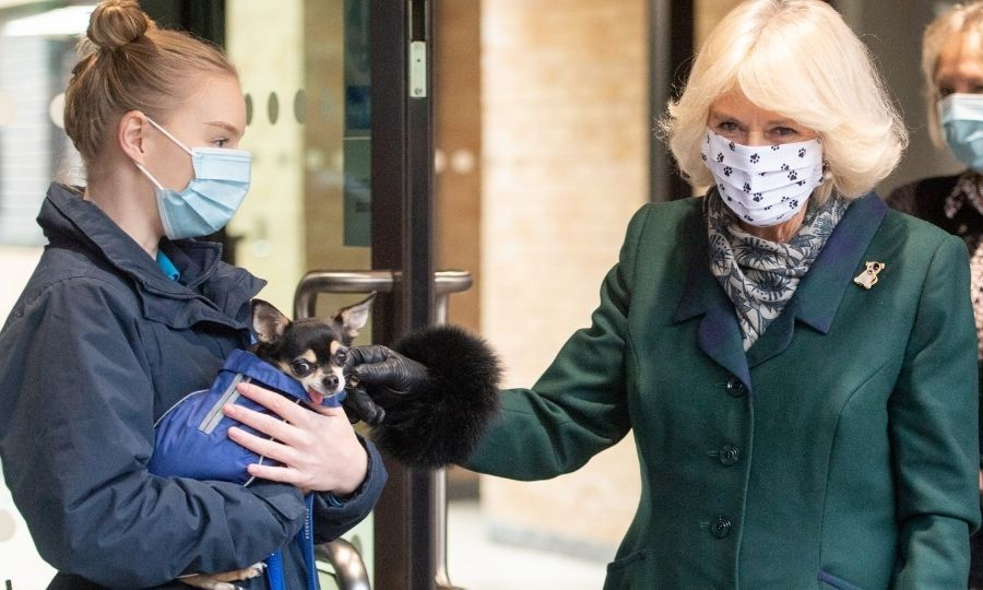 Camilla also met some of the centre's dogs, including this sweet little chihuahua.