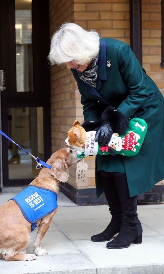 Before leaving, she gave a dog named <Strong>Sandy</strong> a Christmas stocking which included a stuffed animal corgi!