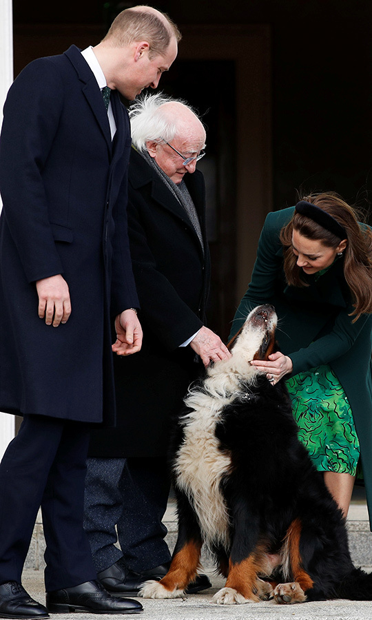 Following tea with the president and his wife, <strong>Sabina Higgins</strong>, the group went outdoors and Kate and William met one of the couple's adorable Burmese mountain dogs. 