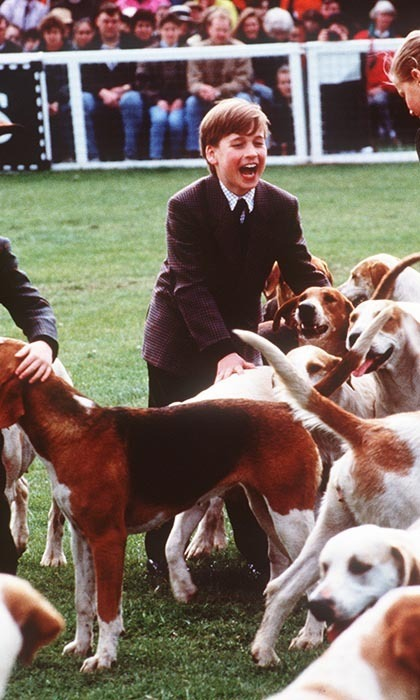 Animal-lover William couldn't have been more thrilled to play with the dog hounds at the Badminton Horse Trials in May, 1991.