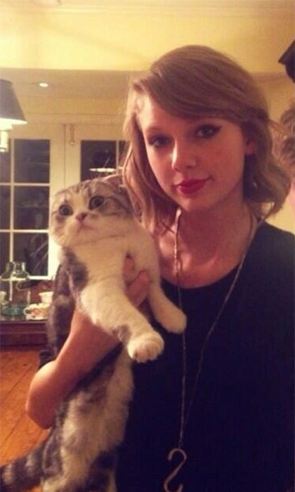 "Taylor Swift's cat Meredith has her own Twitter feed with nearly 11,000 followers. "" Happy. Furry. Confused. Hungry. At the same time,"" reads the Scottish Fold's bio."